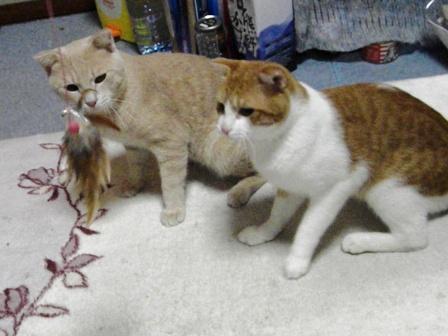 猫釣り3.JPG