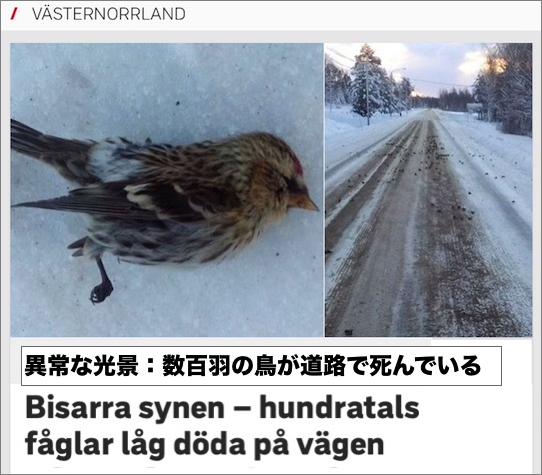 sweden-birds-deaths.jpg