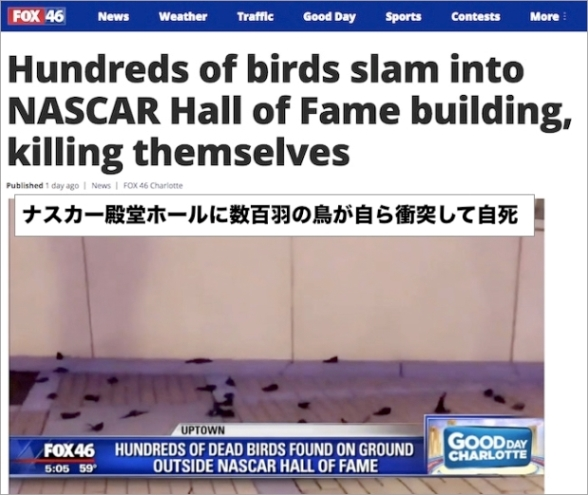 birds-die-themselves.jpg