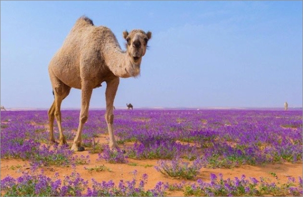 purple-flower-saudi2018.jpg