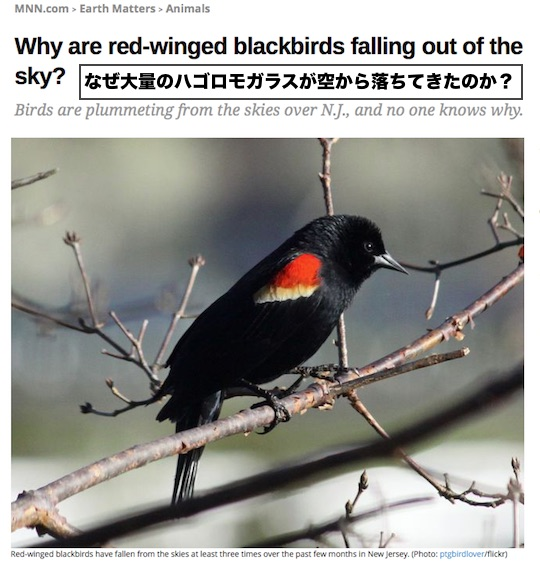 black-bird-deaths.jpg