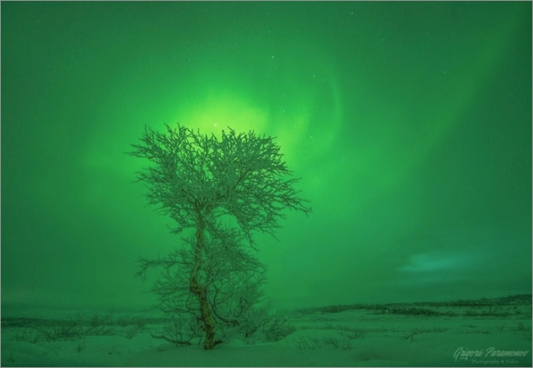 murmansk-tree-auroras2019.jpg