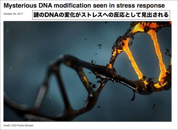 dna-modification-stress.jpg