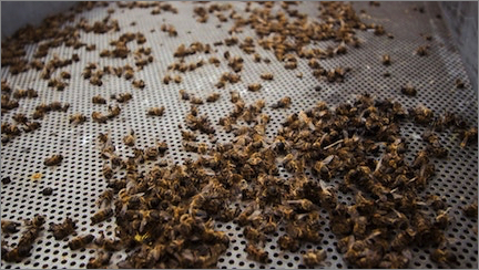bees-2018march-007.jpg