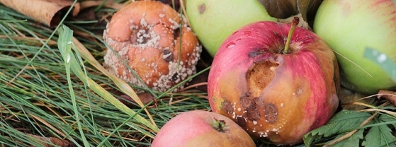 damaged-fruits-israel-may-25-2020.jpg
