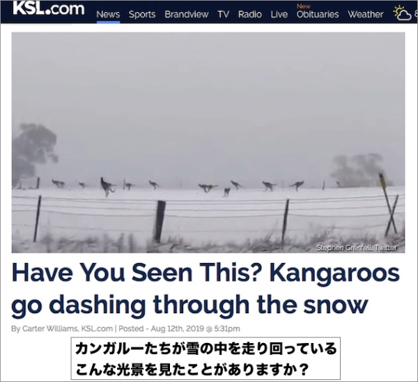 kangaroos-in-snow.jpg