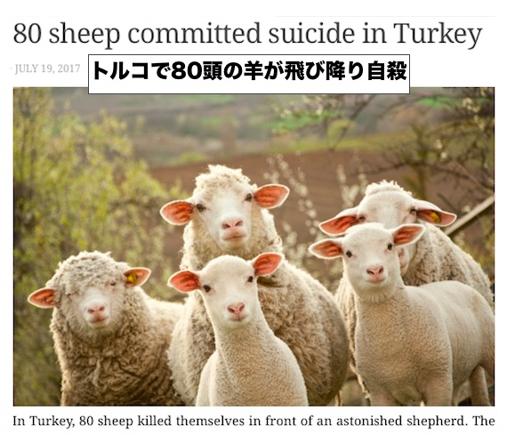 turkey-sheep-suicide.jpg