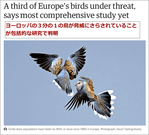 europe-birds-threat.jpg