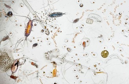 10colorful-plankton.jpg