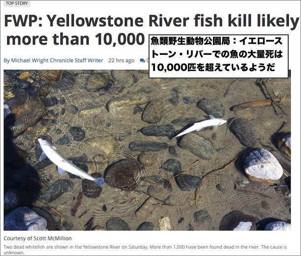 yellowstone-fish-die-1.jpg