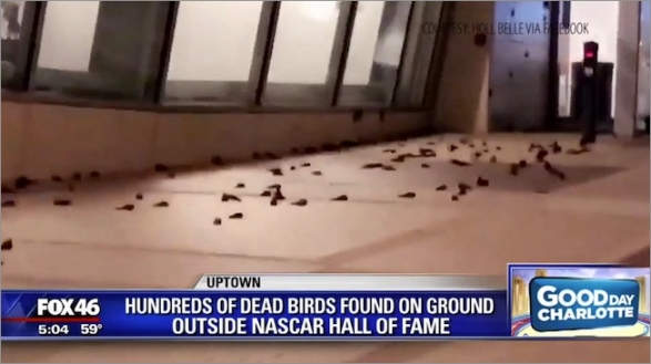 birds-fox-news002.jpg