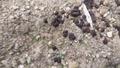「丸種 コールラビ フラン 約70粒【郵送対応】」の商品レビュー詳細を見る