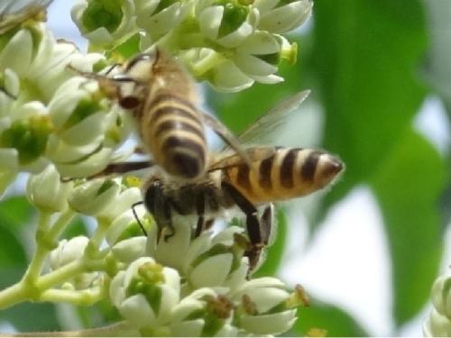 bee bee tree_R.jpg