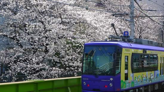 2013神田川の桜2.JPG