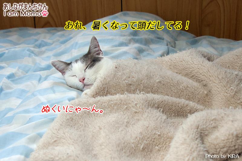 温かい場所で過ごす猫
