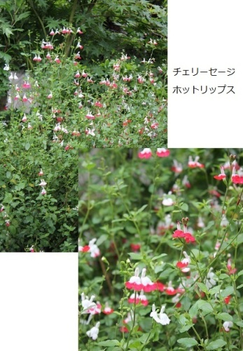 2014_0521_075136-IMG_7155.JPG