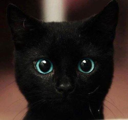 FB  BLACK CAT.jpg