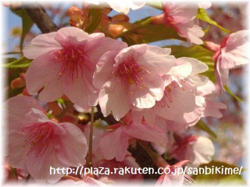 20120402_nagai_06.jpg