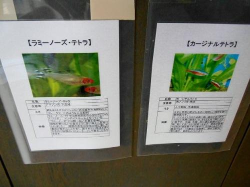 熱帯魚の説明書