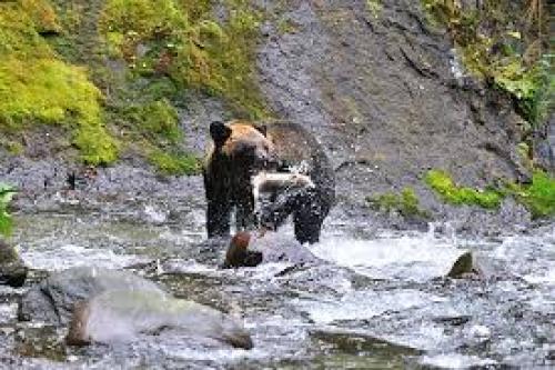 熊のご飯.jpg