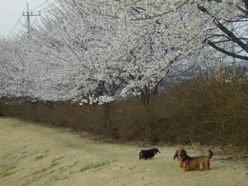 2004年4月フォレストアリーナ1.jpg