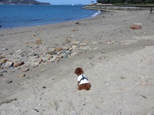 海を眺める珀空 - コピー.JPG