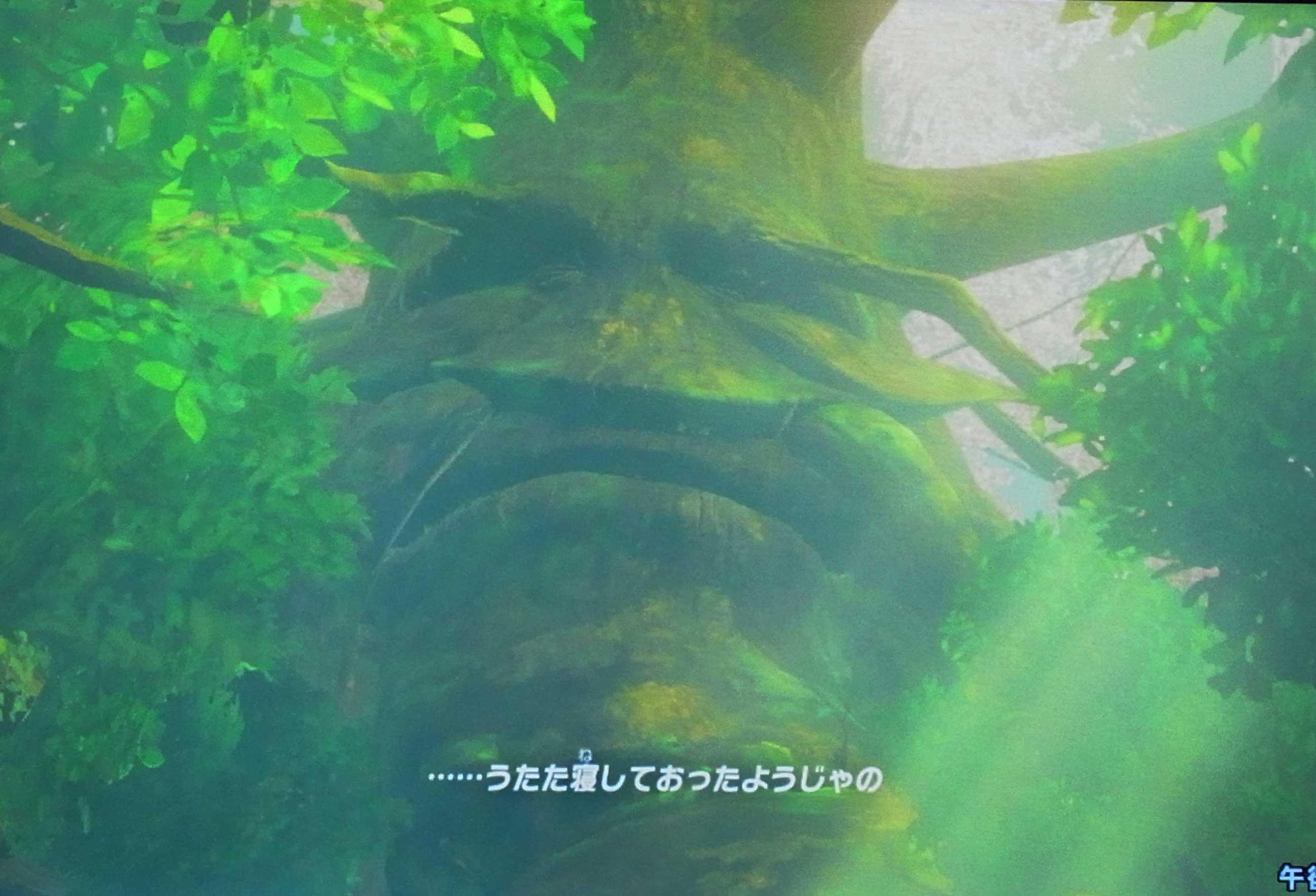 ゼルダ の 伝説 ブレス オブザ ワイルド コログ の 森
