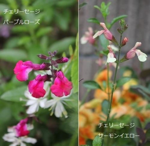 2014_0520_102113-IMG_7076.JPG