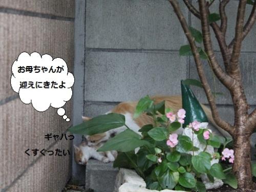2014_0712_174746-IMG_3012.JPG