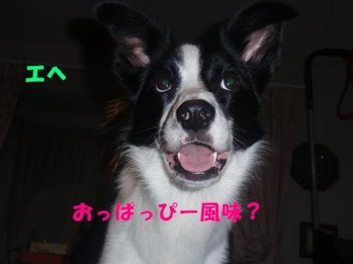 だれ?3.JPG