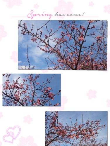 2017-03-30_10.25.38.jpg