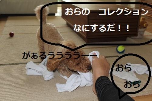 2013_0608_171317-IMG_5996.JPG