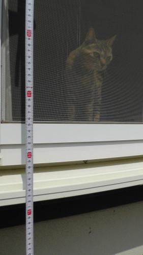 掃き出し窓の猫