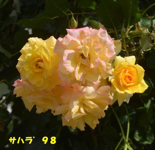 15-13.jpg