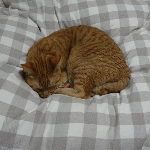 寝てるトロ.jpg