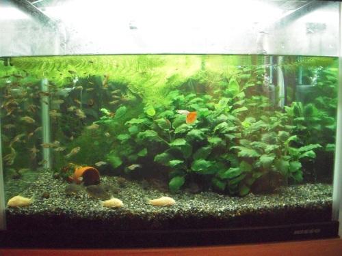 60ワイド熱帯魚水槽