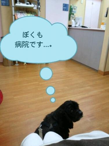 PhotoWonder_share.jpg