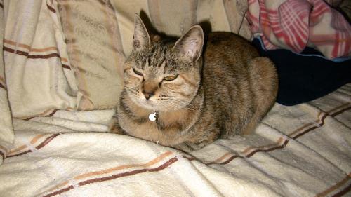 まぶしい顔をする猫