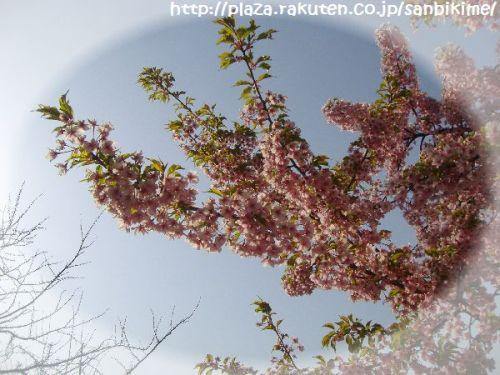 20120402_nagai_02.jpg