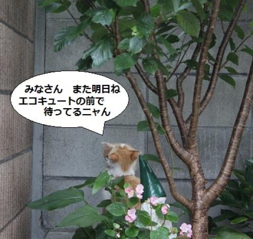 2014_0712_174800-IMG_3025.JPG