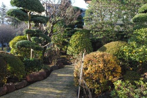 20130101元旦の庭.jpg