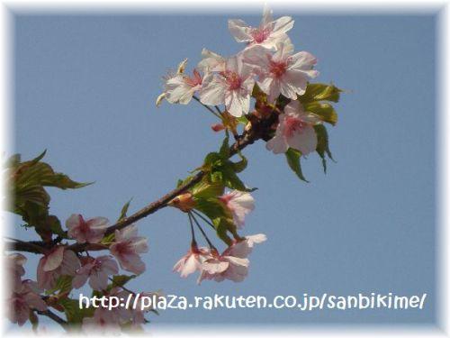 20120402_nagai_04.jpg