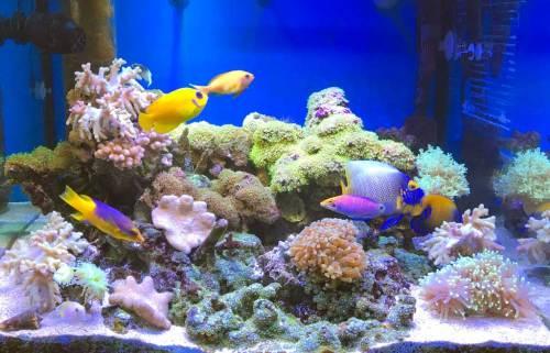 新珊瑚水槽170628.jpg
