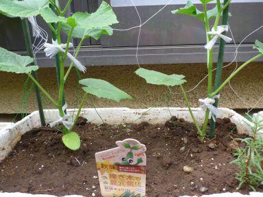 20150730秋野菜02.jpg