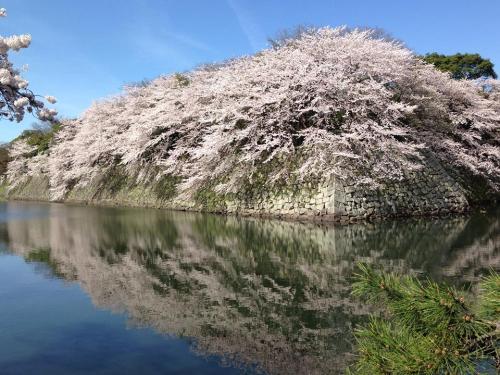 彦根城の外堀.jpg