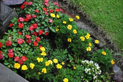 20140709庭の花壇1.jpg