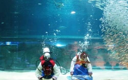 韓国 水族館
