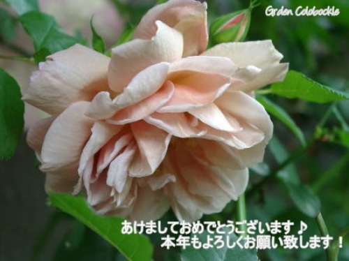 Cafe賀正.jpg