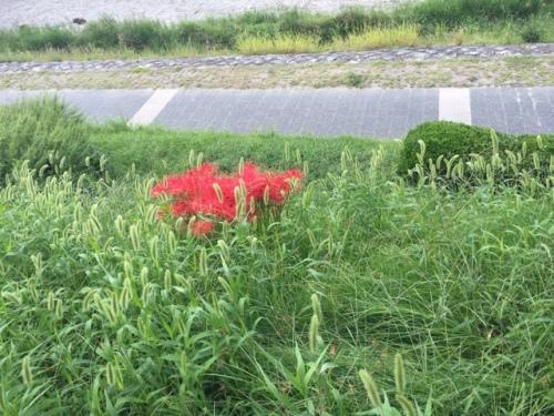 201509241413_1241_iphone.jpg