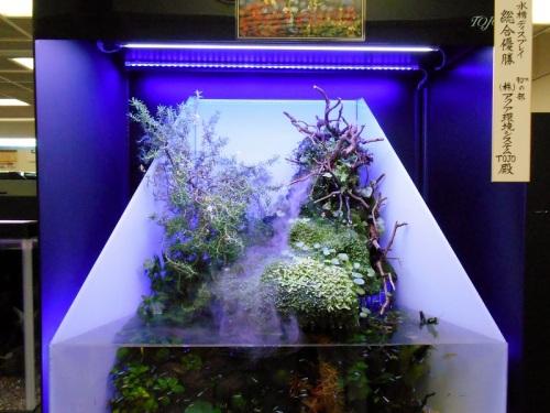 日本観賞魚フェア2014水槽ディスプレイ総合優勝
